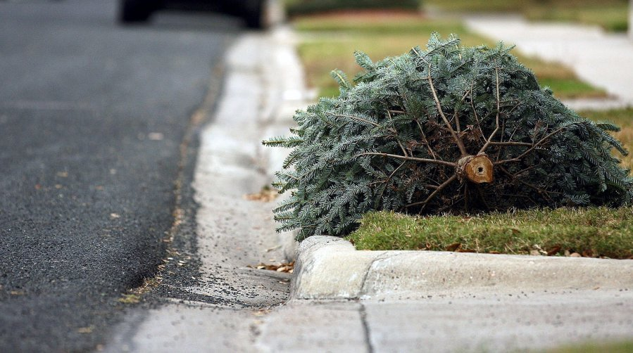 Nice Free Christmas Tree Pick Up Part - 5: C0012349463-664047